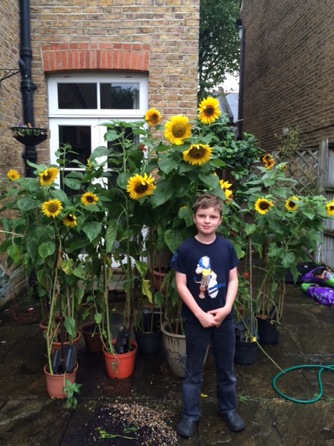 bpf-sunflowers-gerry-img_0559